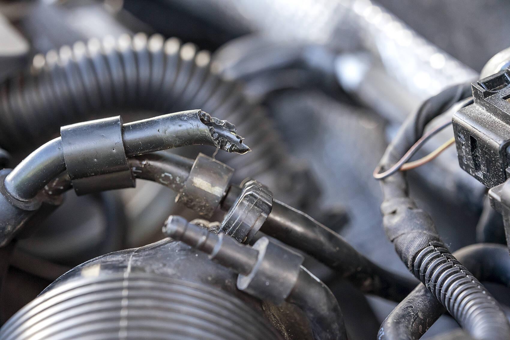 Angebissene Kabel im Motorraum
